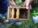 Bienen am Untersberg_10