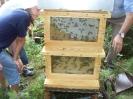 Bienen am Untersberg_11