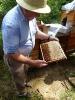 Bienen am Untersberg_3