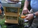Bienen am Untersberg_7